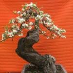 Portugal: Inauguração do MBA – Museu do Bonsai e da Árvore em Sintra