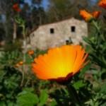 Portugal: Meditação Zen com Amy Hollowell Sensei na Quinta das Águias