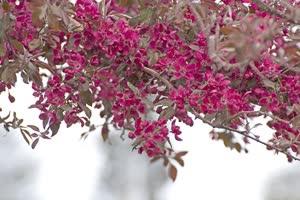 Portugal: Florais de Bach: Formação de Terapeutas