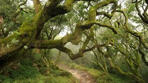 Portugal: Retiro de Yoga no Bosque do Bussaco – com Sofia Frutuoso e Teca Batista