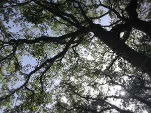 Portugal: Yoga no Jardim da Graça (Lisboa) – sextas às 9h – c/ Teca Batista