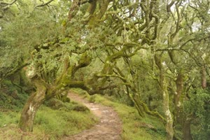 Portugal: Retiro Ser Floresta – na Mata do Bussaco – c/ Teca Batista